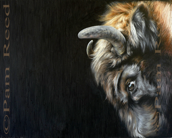 portrait of a charging bison