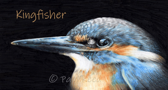 portrait of a kingfisher
